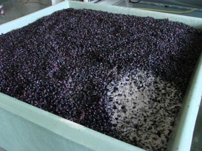 Maceracja Pinot Noir