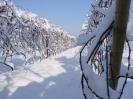 Winnica Wesołów zimą